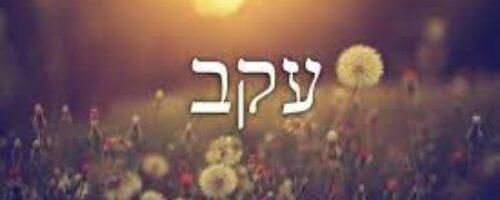 Eikev  TORAH Deuteronomy 7:12–11:25 HAFTARAH Isaiah 49:14-51:3 EMAIL TorahStudy@TempleSinaiPBC.org for link
